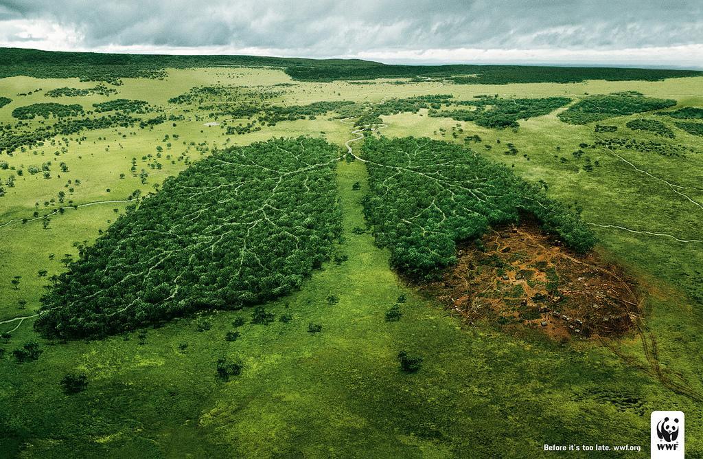 wwf-pulmones-bosque