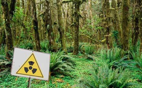 residuos radioactivos en bosques tropicales