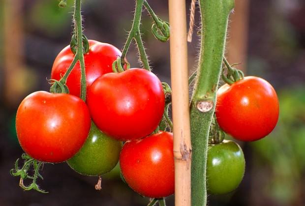 tomates por eVo photo