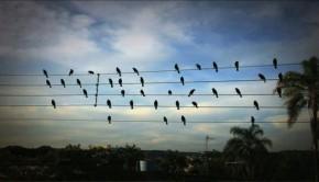 Aves en cables de alta tensión