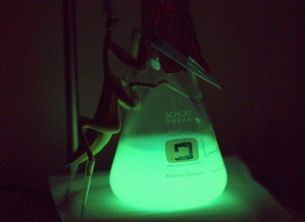 sistema-bioluminiscente
