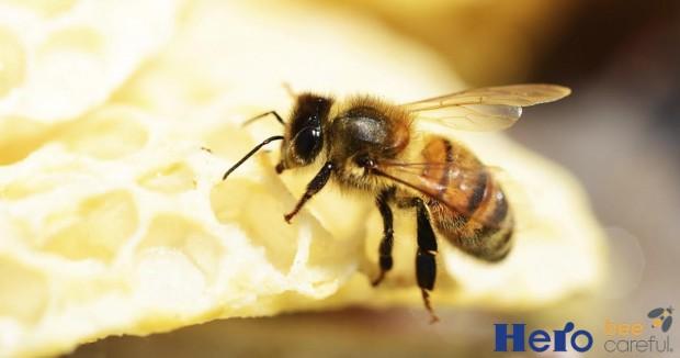 abeja Hero Bee Careful